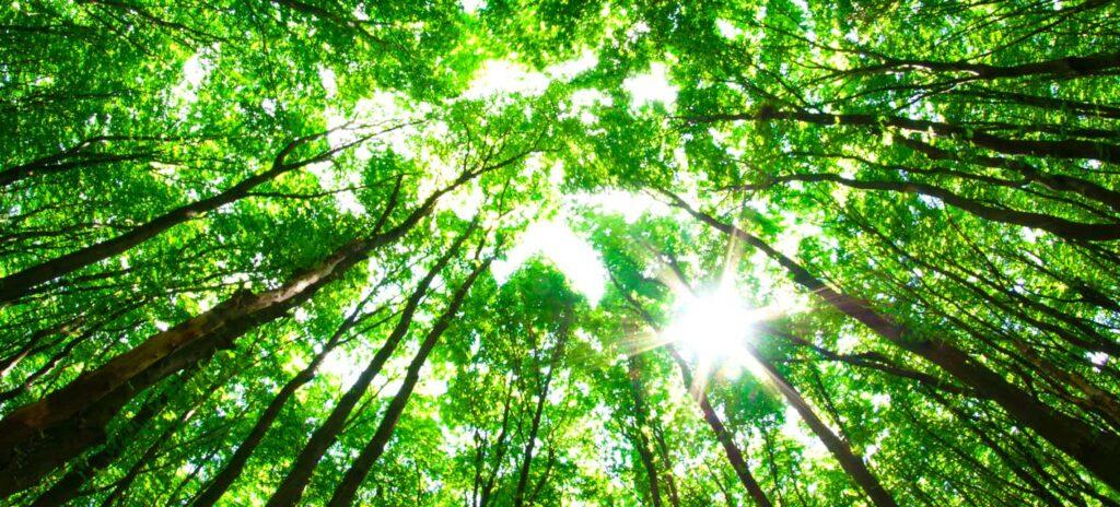 DAPO støtter 'Danmark planter træer'